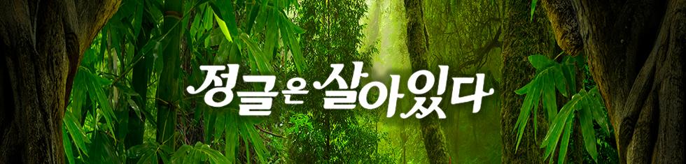 정글은 살아있다